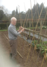 Derek in the garden putting up bean sticks